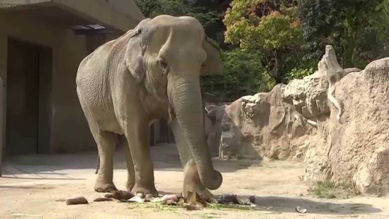 福岡 市 動物園