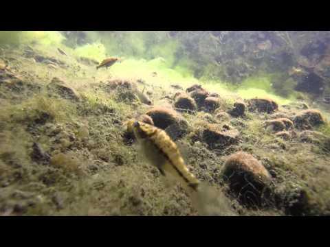 Costa Rica underwater ||  original footage