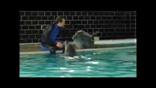 Шоу дельфинов(http://lavico.ru/ http:/ Вчера была с сыном в дельфинарии в санатории г. Хмельник Винницкой области. Сначала пыталась..., 2013-05-22T16:18:10.000Z)