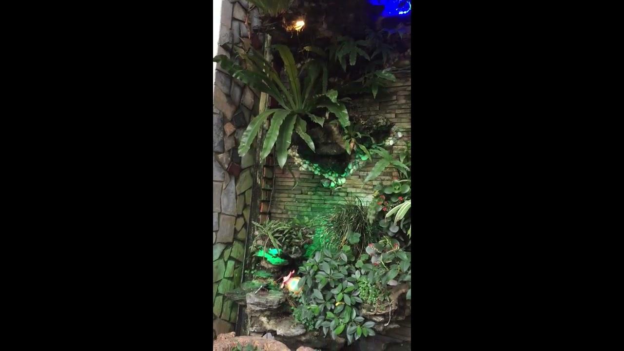 giới thiệu mô hình cây cảnh xen giữa bể cá ,làm đẹp và mát sân vườn…