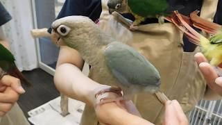 バードプロショップえとぴりか www.etpkbird.com.