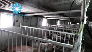 Системы туманообразования в животноводстве, хрячник, маточник, купить туман, холодный туман.(, 2016-04-20T15:18:11.000Z)