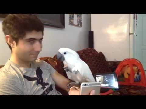 We had a lots of fun in this live stream with my cockatoo❤❤❤