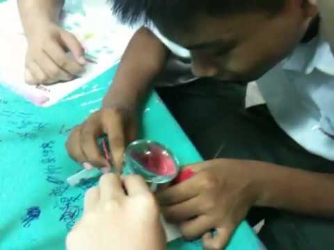 Smktku 2010 3d Hibiscus Rosa Sinensismov Youtube