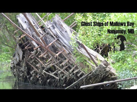 Paddling the Ghost Ships of Mallows Bay, MD