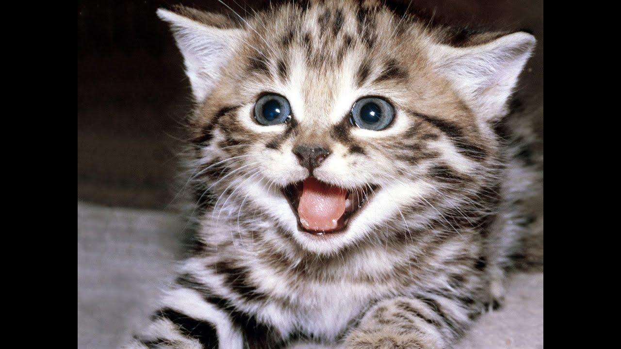 「cat sounds」の画像検索結果