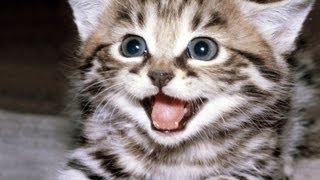 CUTE CAT MEOW  sound effects