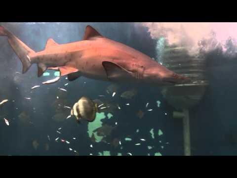 News Requins Aquarium Saint-Malo