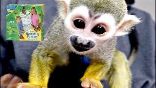 Baby Monkey Butterfly Toy Unboxing #BabyMonkey #MonkeyBooCrew #Cutepet