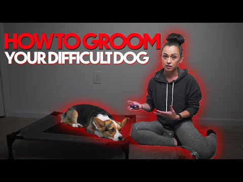 3 STEPS to GROOMING any dog (even if they hate being touched)!