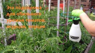 Увеличиваем урожай помидор, огурцов на 20-30 % / Подкормка Борной Кислотой / Сезон 2016(, 2016-06-24T19:45:58.000Z)