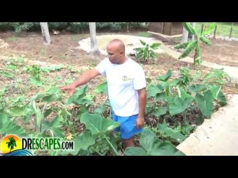 Sustainable Lifestyle In Cabrera Dominican Republic - PartOne