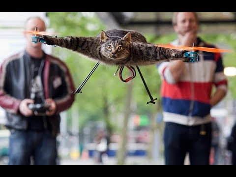 Davie Beatz - Man Turns His Dead Cat into a Drone