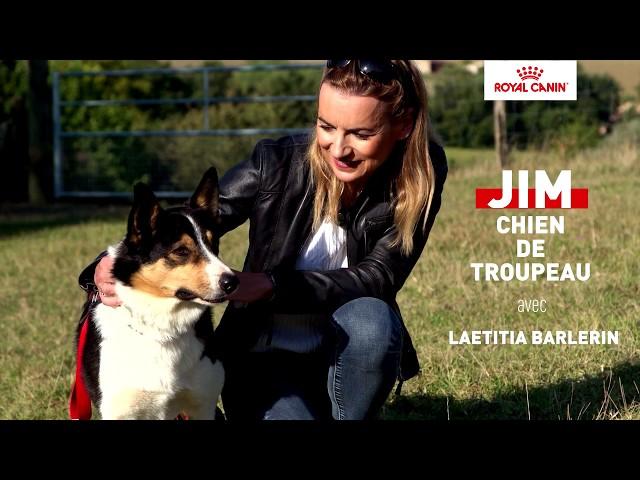 JIM, chien de troupeau