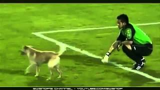 dog in football match