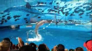 dolphins show in Barcelona zoo 2