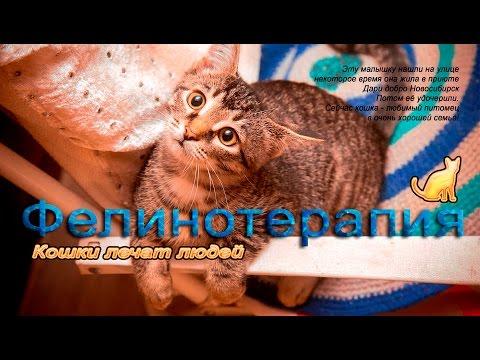 Фелинотерапия - кошки лечат людей koshki iz priyuta Dari dobro Novosibirsk