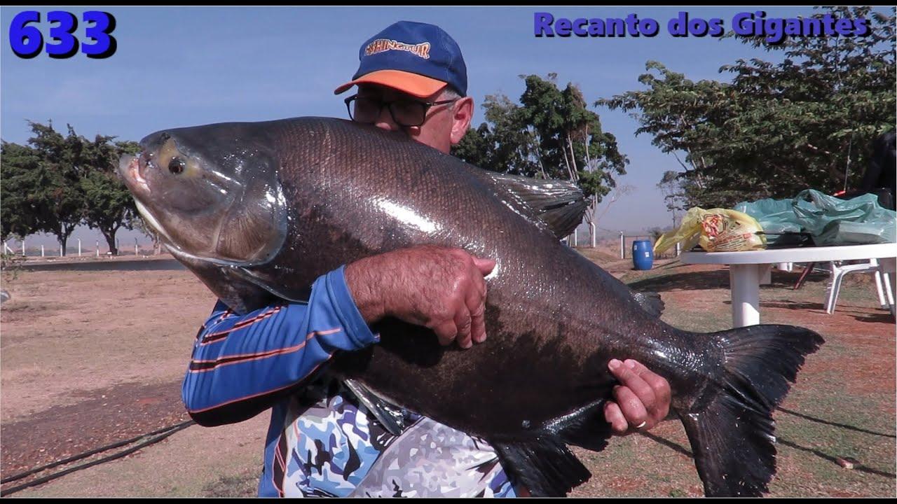 Os Gigantes do Pesqueiro Recanto dos Gigantes II - Programa Fishingtur na TV 633