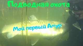 Подводная охота на Амура Мой первый трофей 12кг