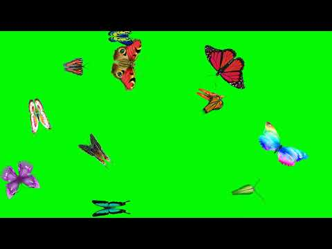 Green screen animated flying butterfly🦋 effect|Latest technology butterfly effect motion background