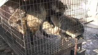 The Fur Industry in 60 Seconds
