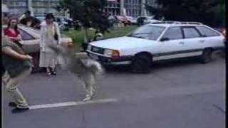 Siberian Husky & His Dog Training Demo