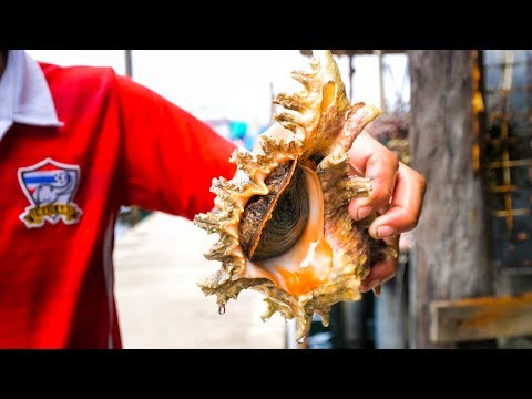 Koh Kood Island - SEA SNAIL SASHIMI + Best Beaches and Attractions   Food Travel Guide!