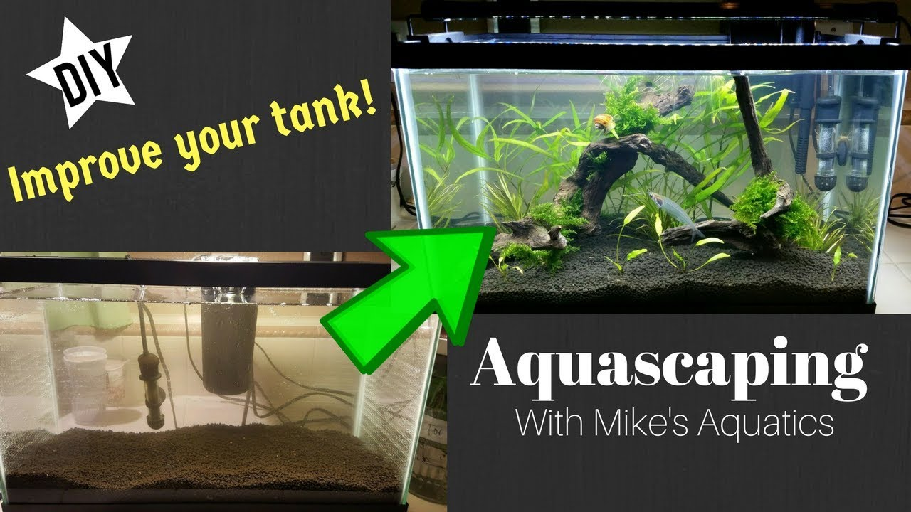 Aquascape Ideas How To Aquascape A 10 Gallon Tank