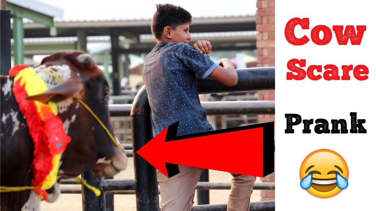COW SCARE PRANK | Eid Special | Haris Awan