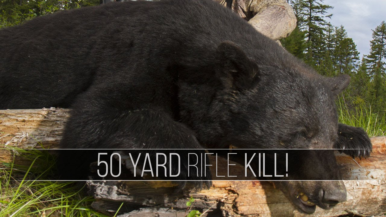 Giant Bear at 50 Yards! - Black Bear Hunt in British Columbia