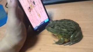 Frog plays cell phone game(https://www.youtube.com/watch?v=Vxh-_rXrqEk I created this video with the YouTube Video Editor (http://www.youtube.com/editor) Rules: ..., 2011-12-23T01:34:20.000Z)