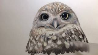 Owl Time lapse Drawing