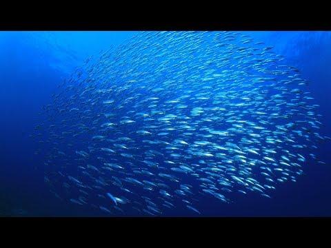 Fishermen Explain: The Magnuson-Stevens Act (MSA) Is Vital