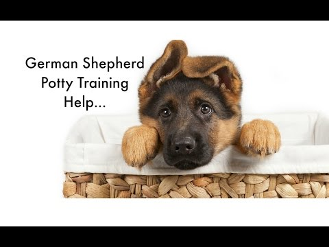 Potty Training Your German Shepherd Puppy German Shepherd Housebreaking Tips Puppy Potty