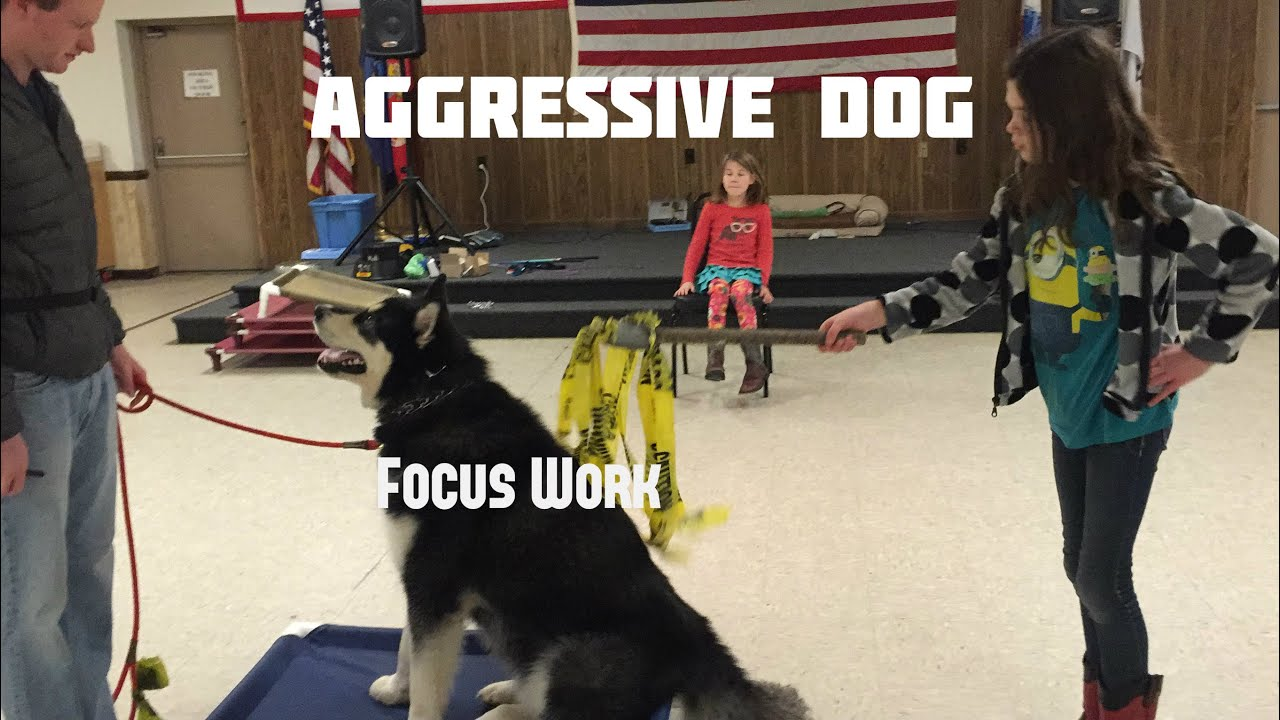 Dog Aggression Toward People - Dog Training, Police K9 ...