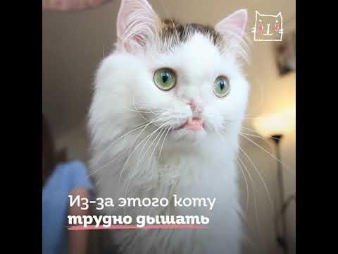 Коты с волчьей пастью