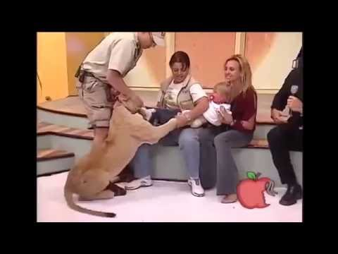 Little girl attacked by Lion on spanish television