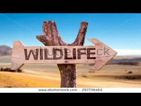 WILDLIFE VIDEO(animals life style and smuggling)
