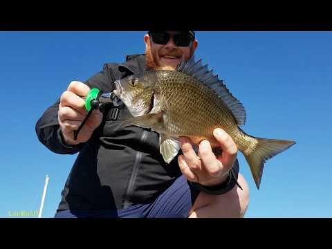 Williamstown BREAM Fishing