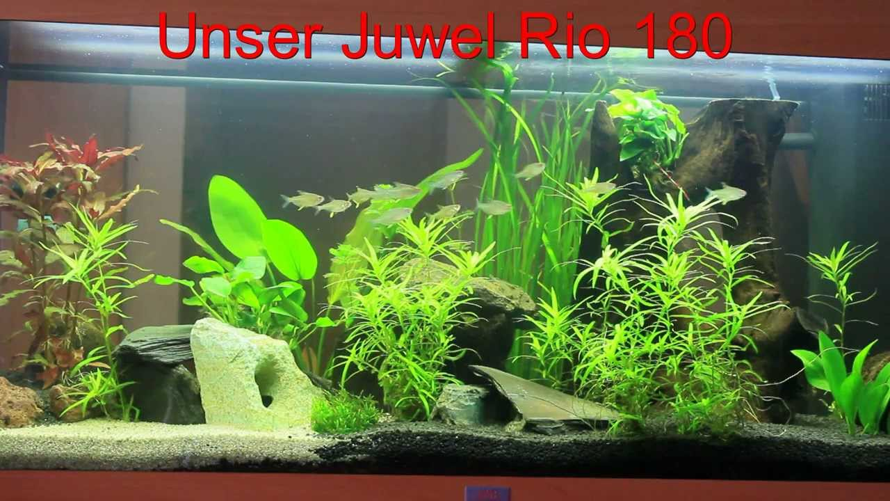 180 liter aquarium von juwel youtube. Black Bedroom Furniture Sets. Home Design Ideas