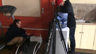 Dog Treadmill, How To Do It Yourself Solid K9 Training