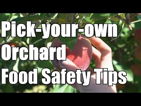 Pick-your-own orchard food safety tips