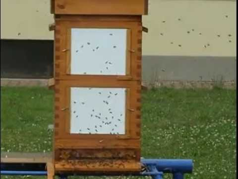 Flight activity of bees - Thermosolar Hive