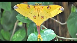 Самые красивые бабочки в мире!  The most beautiful butterflies in the world!