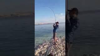 Cırlaz av bayi Adıyaman Atatürk barajı spin turna balık avı