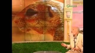 В мире животных. Выпуск 1 (2005 г.)