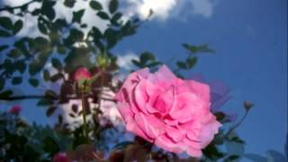 Video Prece de Amor (Emmanuel) adaptada e Cantada por Elizabete Lacerda download MP3, 3GP, MP4, WEBM, AVI, FLV Mei 2018
