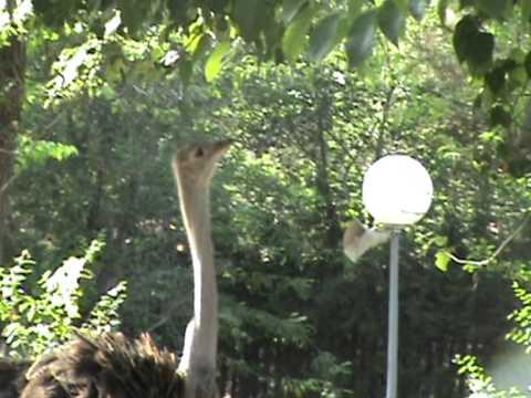 Visita al Zoo de Madrid (3/3)