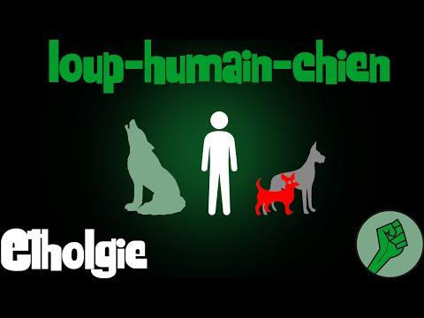 Ethologie#1 Entre chien et loup (+bonus test)