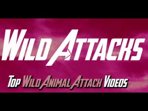Animal Mating Zebra Mating 2017 Amazing animal videos and breeding